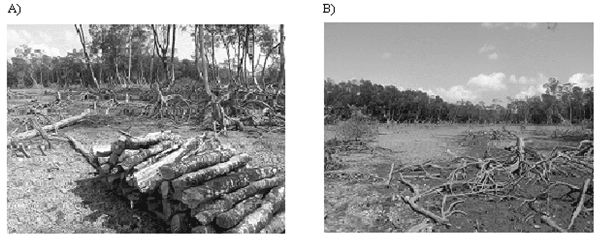 Figure 4-A and b. degraded mangrove Areas by cutting trees for commercial purposes. Photo: REDEMA (2005).