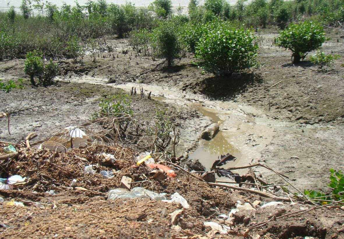 Figure 4: landfill of solid waste on the banks of the river Marapanim. Source: ALMEIDA, 2010.