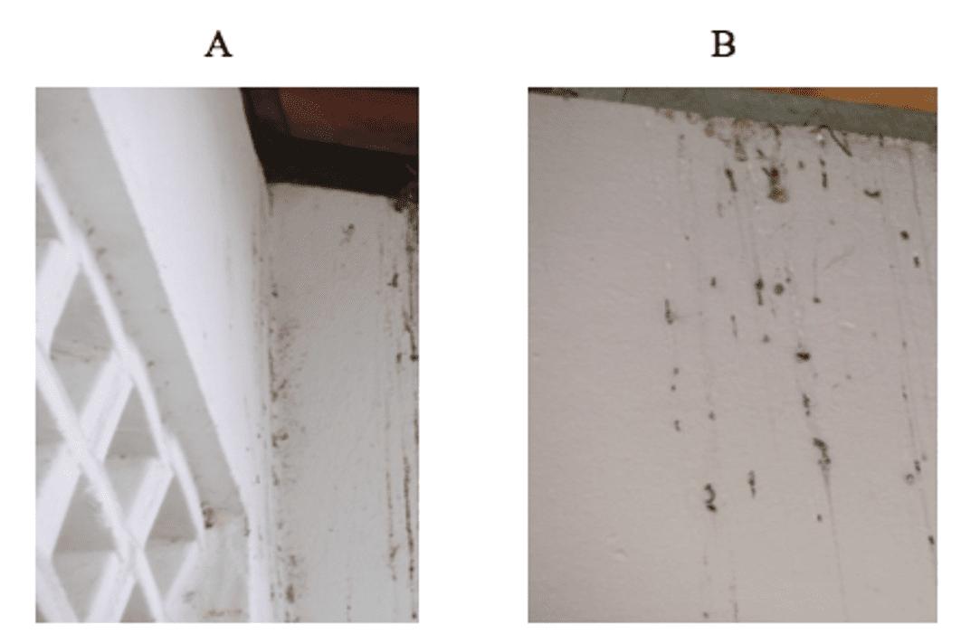 Escrementi di piccione sulle pareti delle aule e la mensa.