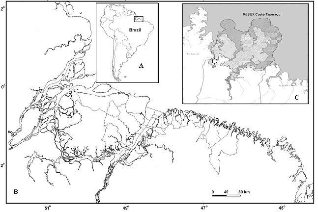 Location of the study area. (A) Brazil, (B) coastal zone, brazilian Amazon (C) location of the community of Tamatateua.