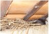 Ninho de pombo em coluna próxima a sala de aula