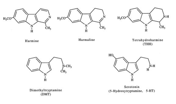 Figura 1. Estruturas moleculares de alcalóides N, N-dimetiltriptamina e harmala encontrados na ayahuasca. A serotonina é incluída para ilustrar a semelhança molecular com os outros alcalóides de indol. Callaway, James, 1996
