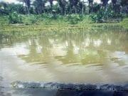 Trecho do Riacho Bom Fim ainda preservado no ano de 1999. Fonte: Valério, 1999.