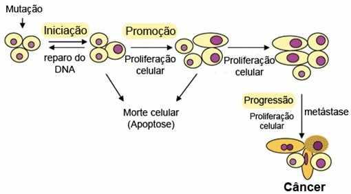 Etapas da carcinogênese. Fonte: Ministério da Saúde (2010).