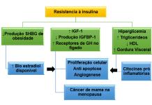 Risco metabólico associado a RI e rota para o CM. Fonte Adaptada de: BRAUN; WORMS; LEROITH (2011).