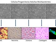 Figura 1 – CPAMs dando origem a diferentes tipos celulares.