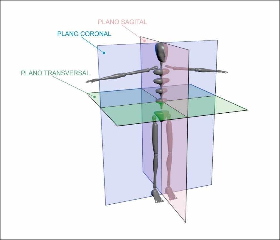 Figura 1 - Divisão do corpo humano em Plano Sagital, Coronal e Transversal. Fonte: Cinesiologia, Planos, Eixos e Movimentos - Prof. Dr. Guanis de Barros Vilela Junior. Desenho: Fábio Fafers