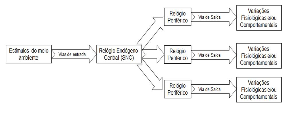 Figura 2 - Relógio central, relógios periféricos e múltiplas saídas (Adaptado de Cymborowski (2010).