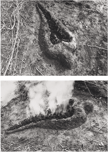 Figure 5 - Ana Mendieta, Untitled (Silueta Series), 1980. 2 lifetime black and white photographs 8 x 10 inches (20.3 x 25.4 cm) each. [http://www.galerielelong.com/artist/ana-mendieta]