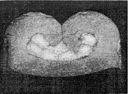 Figura 8: Terminal crimpado; dados experimentais: –altura 1,25/1,26 mm –largura 2,25 – 20 GA (VILLENEUVE et al., 1996).