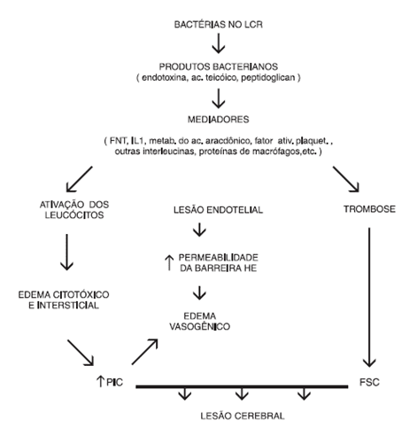 Figure 1-Bacterial From Pathophysiology. Source: (3)
